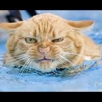 Kas sakė, kad katės bijo vandens?